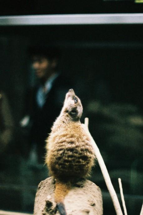 OLYMPUS OM-2 ZUIKO 50mm F1.4 Tokyo / Ueno Zoo