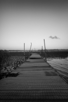 LEICA M9-P + Leitz SUPER-ANGULON 21mm f4 Lake Inba , Chiba – 2013/08/31