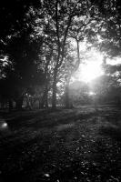 LEICA M4-P + Leica SUPER ANGULON 21mm f4 + NEOPAN100ACROS Yoyogi Park , Tokyo – 2013/09/29