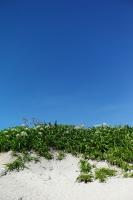 LEICA M9-P + Leitz Summaron 3.5cm f3.5 Kudakajima Island , Okinawa - 2014/06/27