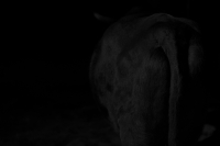 Fujifilm X-Pro1 + VOIGTLANDER NOKTON vintage line 50mm f1.5 Aspherical VM Ueno Zoo , Tokyo – 2015/08/12