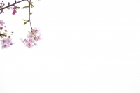LEICA M(Typ262) + VOIGTLANDER NOKTON vintage line 50mm f1.5 Aspherical VM Sendagaya , Tokyo – 2017/02/05