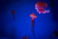 LEICA M(Typ262) + VOIGTLANDER COLOR-SKOPAR 35mm F2.5 P II Enoshima Aquarium , Fujisawa city , Kanagawa - 2017/05/13