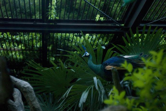 LEICA M9-P + Summarit 50mm F1.5 Ueno Zoo , Tokyo – 2014/08/11